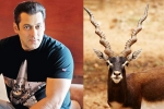 Chinkara Poaching Case: Rajasthan Government To Approach SC Over Salman Khan's Acquittal